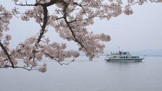 4K 日本のさくらの名所100選 海津大崎の桜