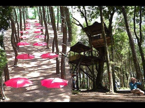 Wisata Rumah Pohon Hutan Pinus Songgon,SPOT SELFI TERKINI