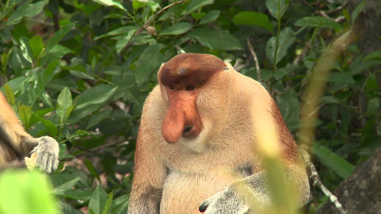 næse aber