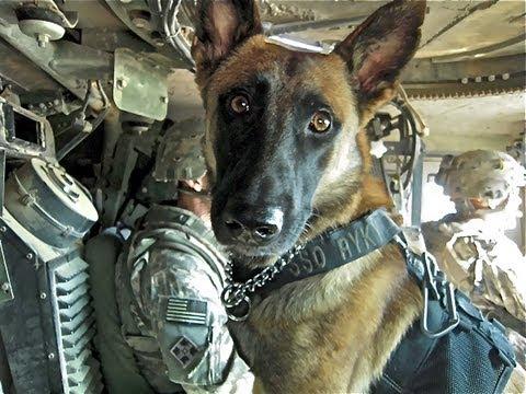 war dogs americas forgotten heroes