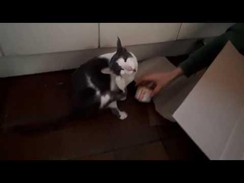 Chipper & Momo, our oriental shorthair cats 2019E04