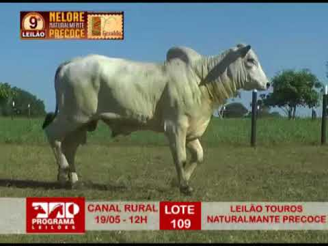 LOTE 109