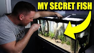 SECRET FISH added to AQUARIUM - The king of DIY