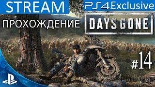 Ps 4 Days Gone  ЖИЗНЬ ПОСЛЕ ПРОХОЖДЕНИЕ ЭКСКЛЮЗИВА  Stream  14