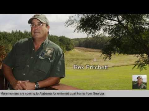 Georgia Quail Hunting At Great Southern Outdoors Alabama Quail Hunting