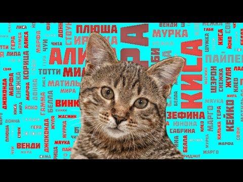 Как выбрать имя для Кошки ?