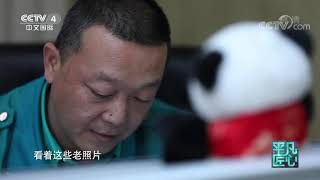 《平凡匠心》 20191221 熊猫奶爸·马涛| CCTV中文国际