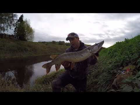 On the Somerset levels fishing for pike