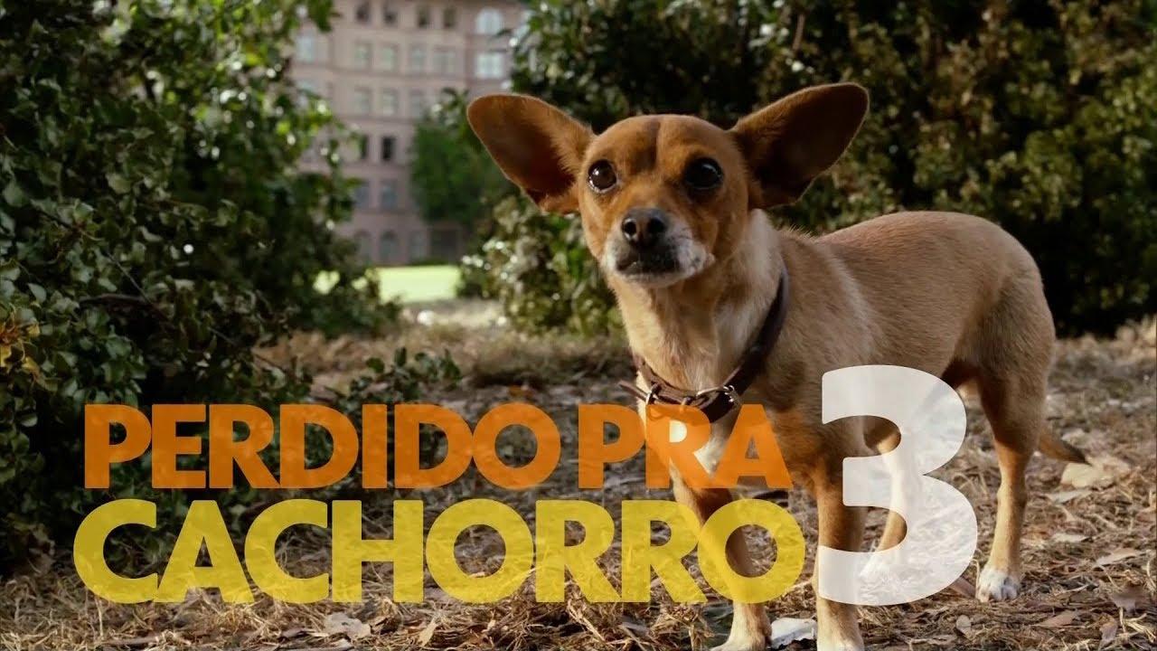 Chamada Do Filme Perdido Pra Cachorro 3 Na Sessao Da Tarde 24 11 2017 Youtube