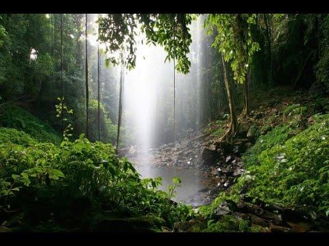 RAIN & JUNGLE SOUNDS For Studying - Meditation - Relaxation - Deep Sleep -  Wellness & Inner Balance