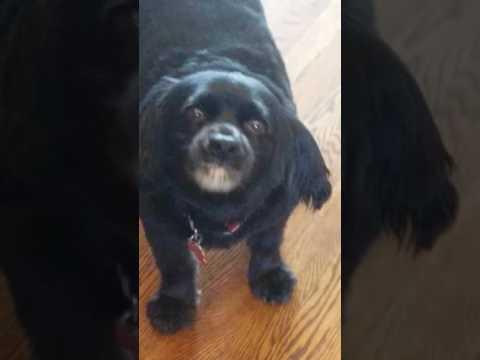 Peanut butter dog *Funny Dog!*