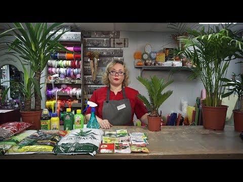 """""""Удачная среда"""" - выращиваем комнатные пальмы (Бийское телевидение)"""