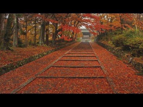 The four seasons in Kyoto(Japan), Autumn leaves【四季の京都、秋・紅葉】