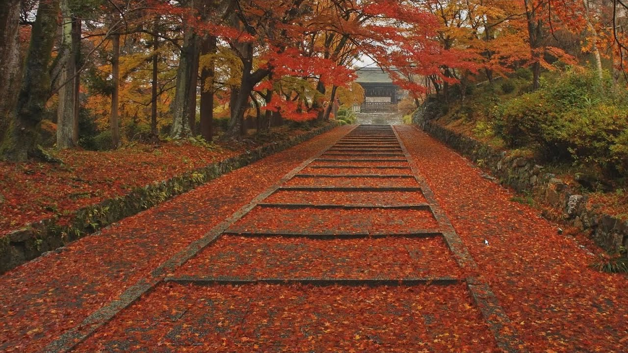 Live Wallpaper Fall Leaves The Four Seasons In Kyoto Japan Autumn Leaves【四季の京都、秋・紅葉