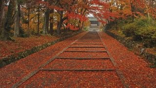 The four seasons in Kyoto(Japan), Autumn leaves【四季の京都、秋・紅葉】