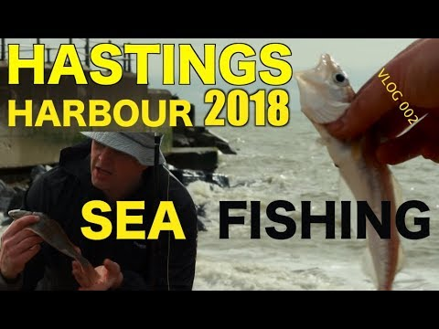 VLOG 02 Sea Fishing Hastings- Two Small Fish And A Surprise From Above