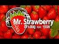 Dj.AomDoo Feat. YOSHI - Mr.Strawberry (Original Mix) + FREE DL