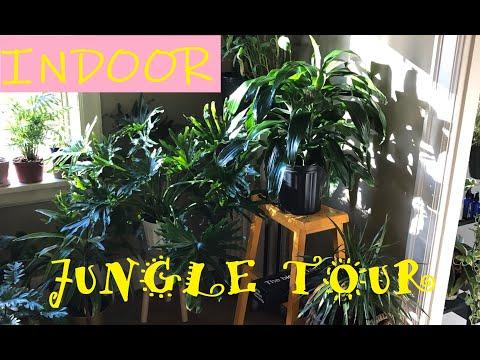 INDOOR JUNGLE TOUR /SEATTLE 2019
