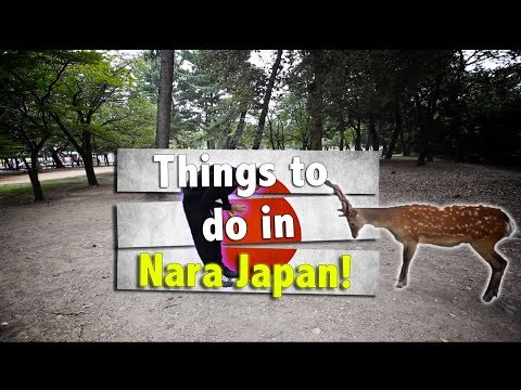 Things you can do with ONE day in Nara, Japan!