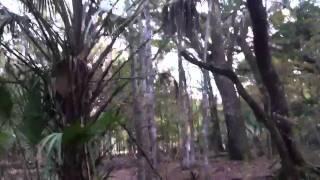 Hiking Citrus Loops