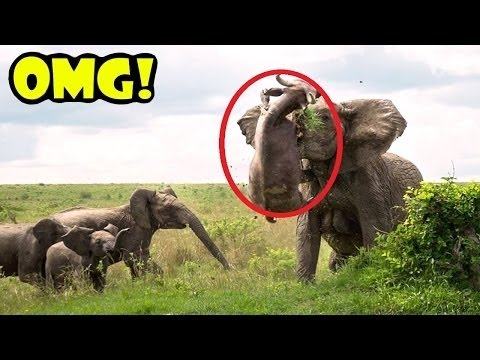 #CAUGHT IN THE ACT    Documentary    Animals Extreme    Lions Elephants#1