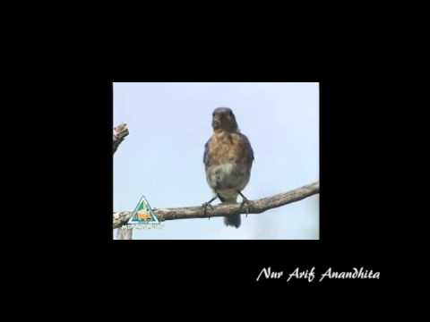 Editing Blue Bird Adobe Premiere
