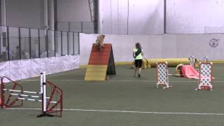Napa Fox Valley Dog Training Club Akc Agility Trial 9-15-13
