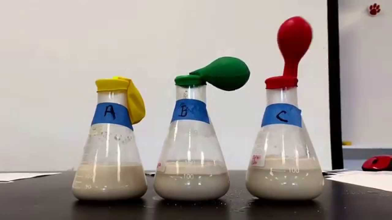 yeast cellular respiration lab youtube