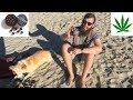 Marijuana Edible Review: KIVA Terra Blueberries 120 mg