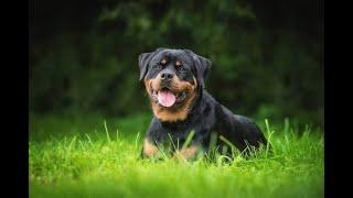 Top 10 Blue Eyed Dog Breeds || That have Blue Eyes ||
