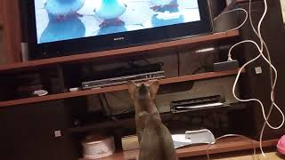 И кошки смотрят телевизор))))