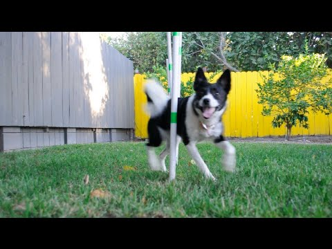 How To Make Your Own Low-Cost Dog Agility Weave Poles