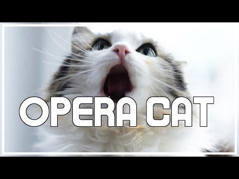 Half Hour Opera Cat