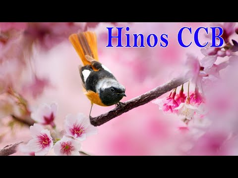 ccb-hinos-2020-ccb-lindos-hinos-cantados-melhores-músicas-de-hinos