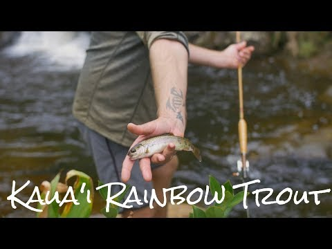IN SEARCH OF WILD KAUA'I RAINBOW TROUT