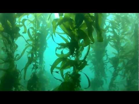 Dive Catalina Island, Ca. Black Rock