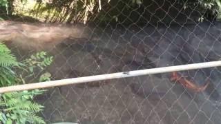 鹿児島南九州市川辺 たかたの命水