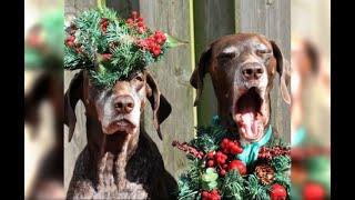 Смешные животные видео приколы сборник 2020 2021 Приколы с животными до слез