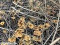 Pilze am 26.11.2017 | Pilze suchen 2017 | Pilze sammeln im November |