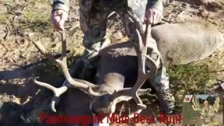 Giant Muzzleloader buck on the Paunsaugunt
