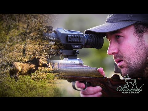 Warthog Hunt In An African Paradise | Olivewoods Game Farm, Part 1