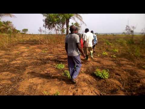 Otuo Farms Com. Ltd. Gh. land leasing inspection.