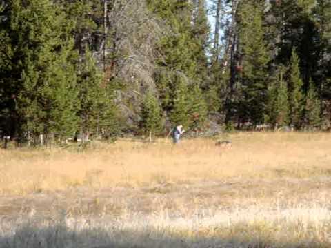 Yellowstone - Man vs. Wolf
