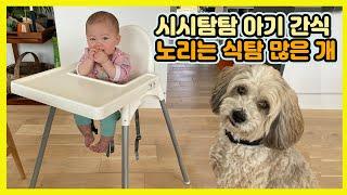 미국시댁방문 - 6개월된 아기 간식 뺏어먹는 개, 안울…