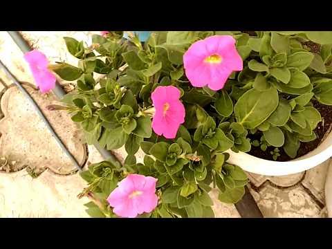 Что цветет у нас в холоде? Какие цветы не боятся цвести?