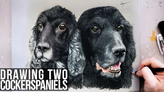 Drawing Two Cocker Spaniels - Pet Portraiture