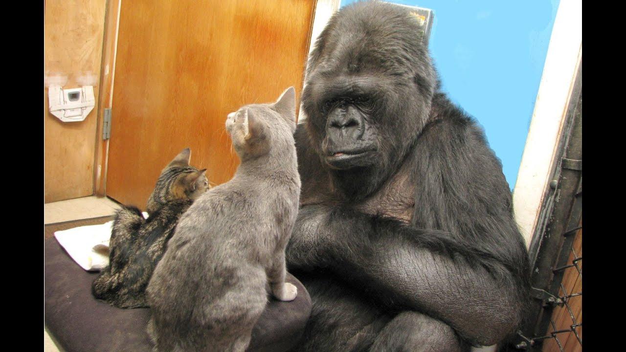 Kokos Kittens are Growing - YouTube