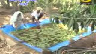 Organic Agriculture in Karnataka