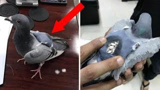CRAZIEST Ways Of Smuggling Drugs!