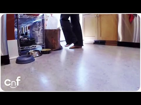 GoPro Cat Camera   Life of a Feline